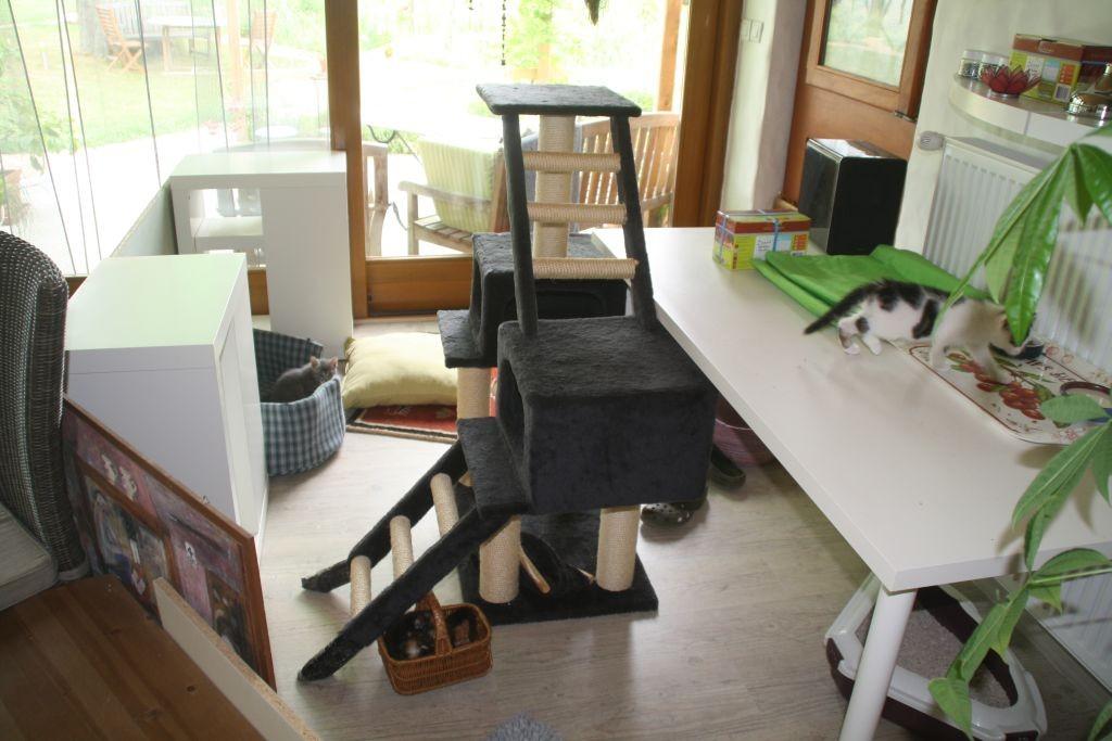 Die Katzen bekommen ein neues Revier in der Veranda
