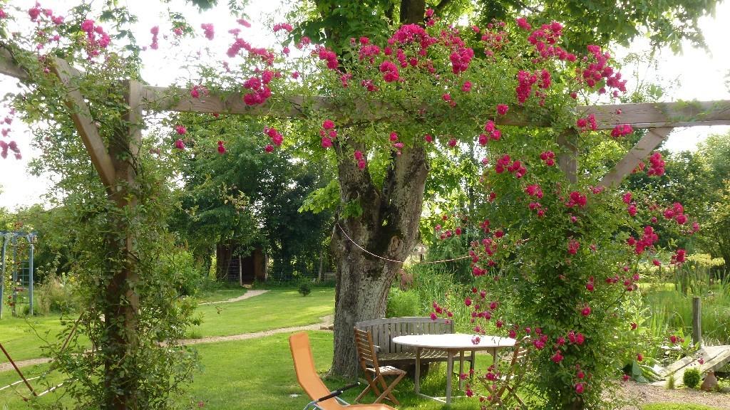 Das Rosenspalier an der Terrasse