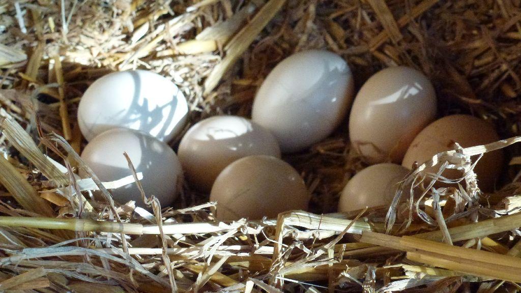 8 wunderbare kleine Eier warten darauf fertig ausgebrütet zu werden