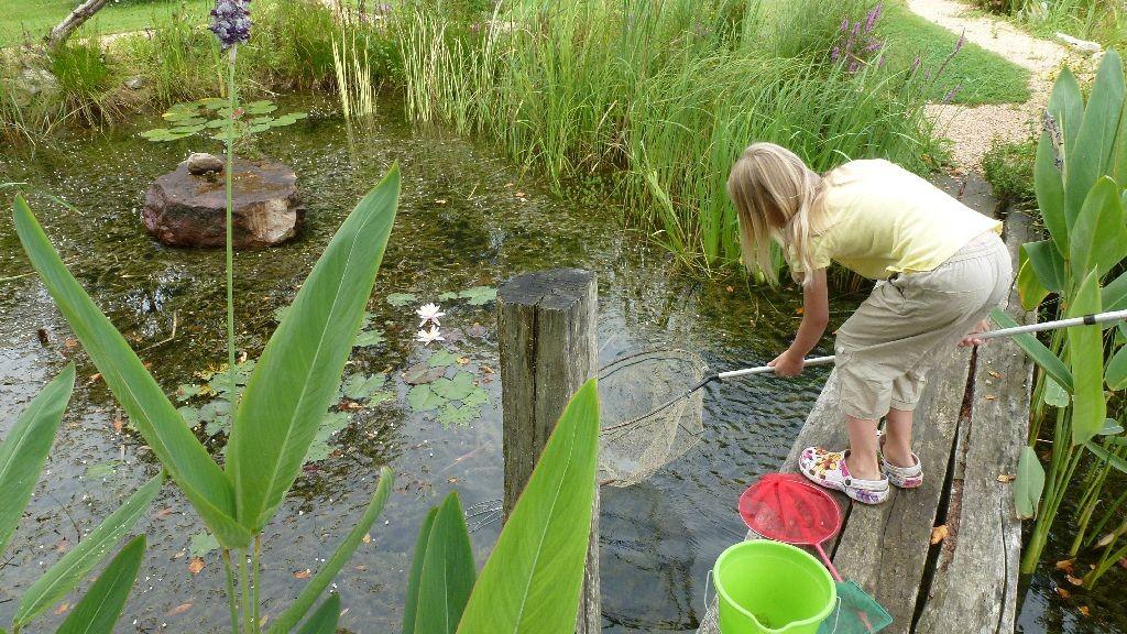 Zora fischt für Beas neuen Teich Quaulquappen und Molche