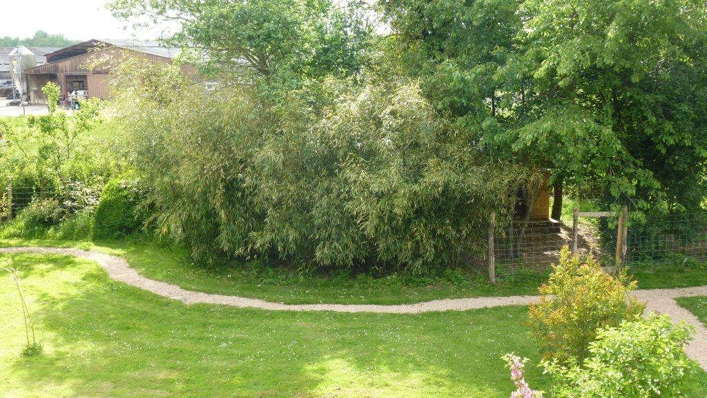 Der Bambuswald neben dem Hühnerhaus