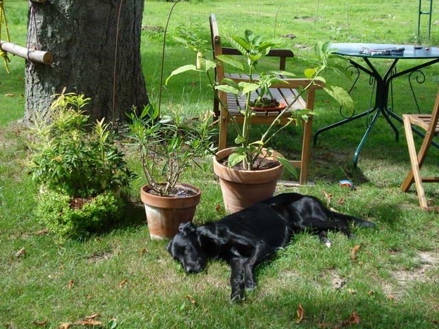 Luke geniesst die Sonne - es entsteht ein Sitzplatz unter der Kastanie