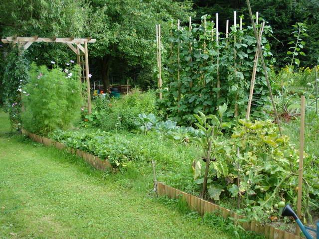 Der frisch angelegte Gemüsegarten gedeiht