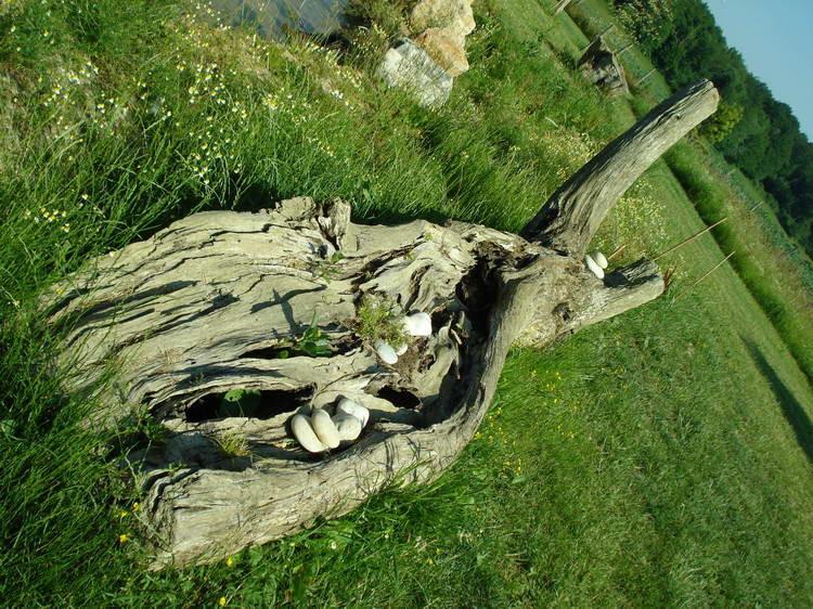 Dieser alte Baumstamm von der Seille muss erst noch platziert werden
