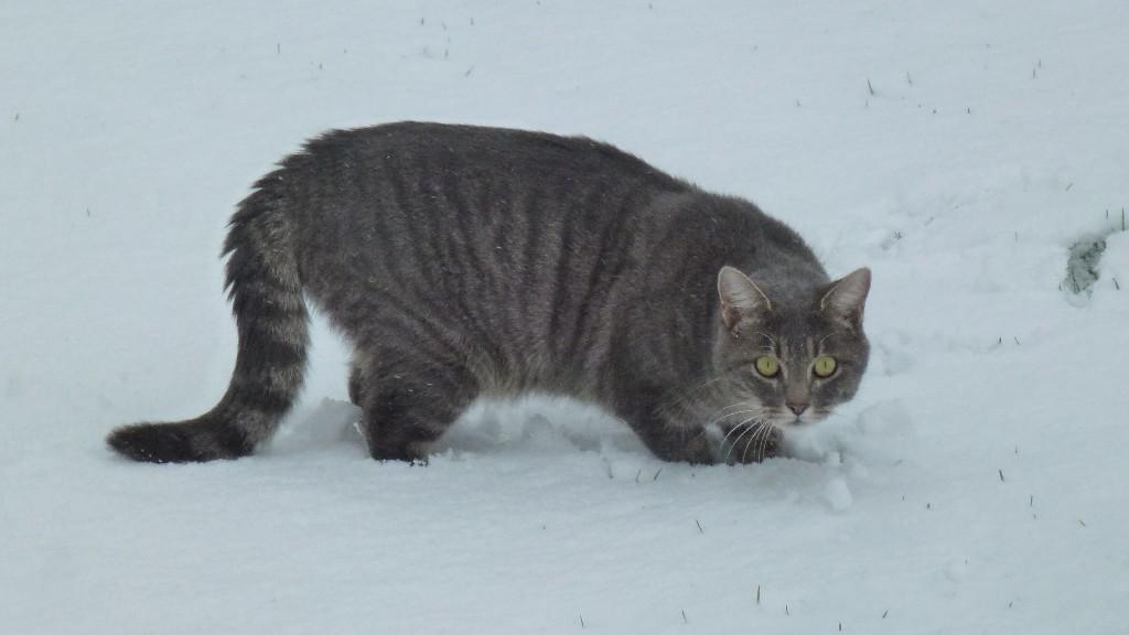 Grizzly gefällts im Schnee