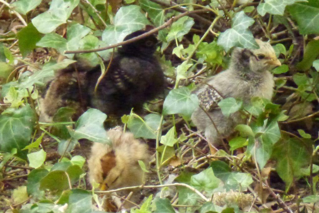 Sechs Kleine haben Thobeka und Frieda