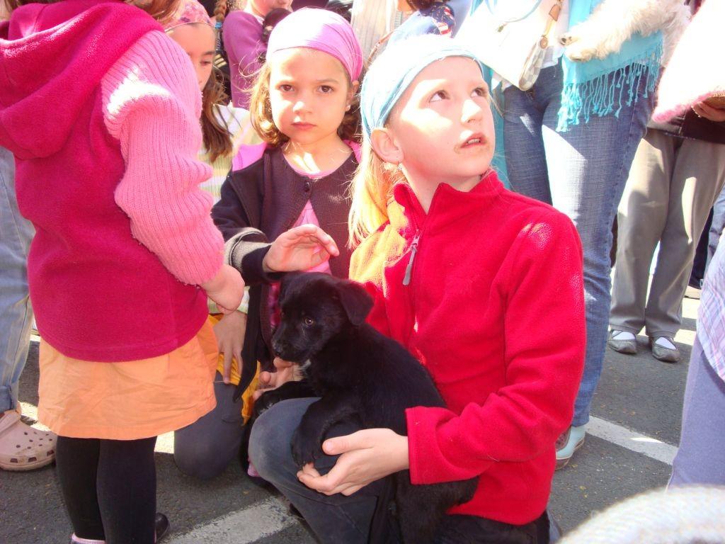 Markt in Louhans - Zora und Naomi entdecken die jungen Hunde
