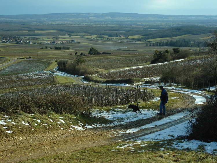 Spaziergang in den Weinbergen bei Buxy
