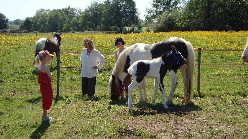 Zu Besuch bei Monika Boss und ihren Pferden