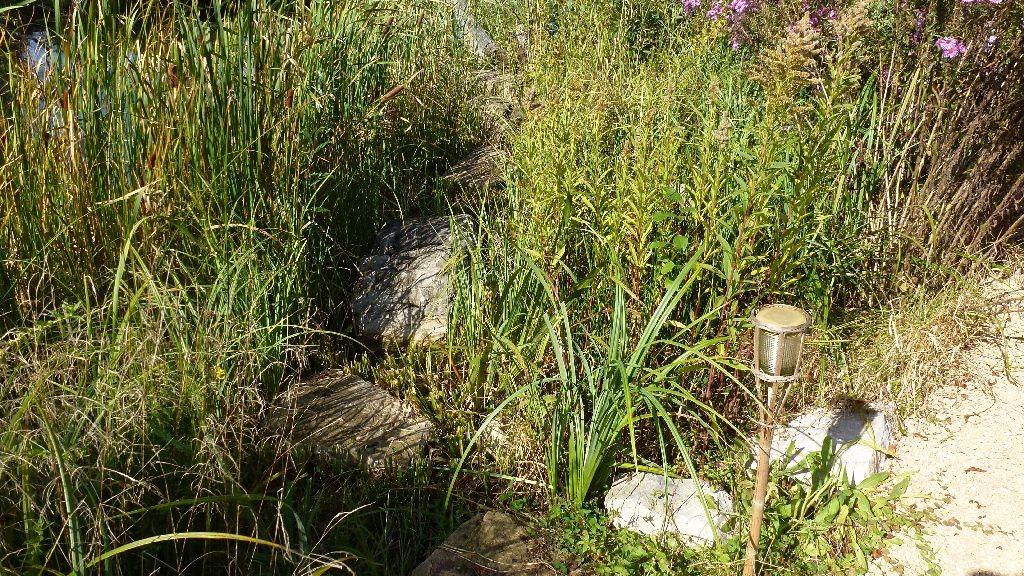 Der Steinweg durch die Uferböschung ist wieder freigelegt