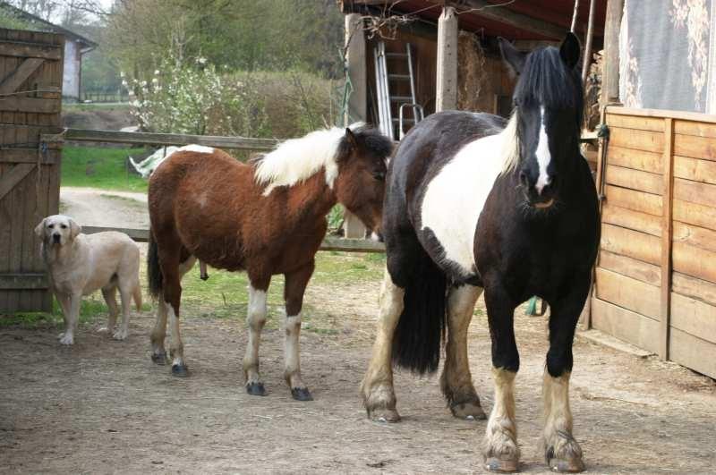 Marcs Pferde