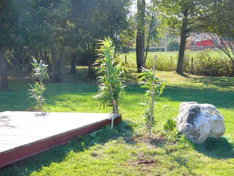 Am Ponton pflanze ich Bambus