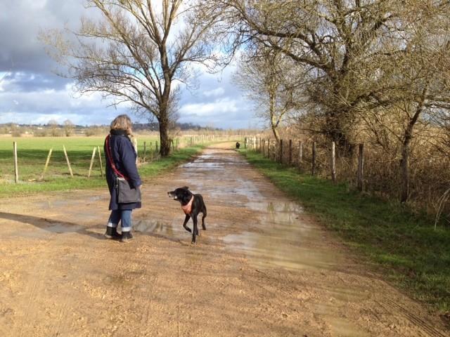 Spazier an der Seille mit Barbara und den Hunden Luke und Amir
