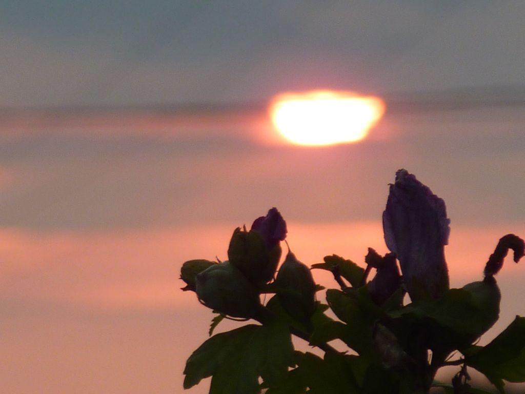 Sonnenaufgang hinter der Roulotte
