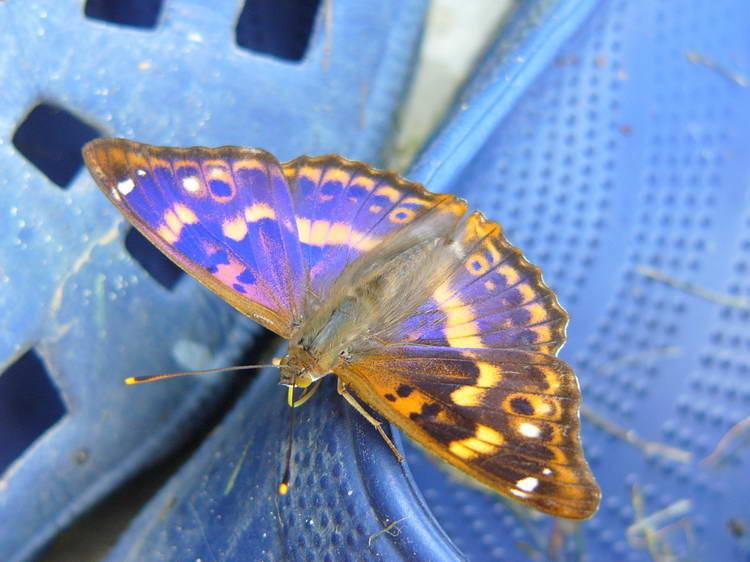 Unzälige Schmetterlinge sind in diesem Jahr unterwegs
