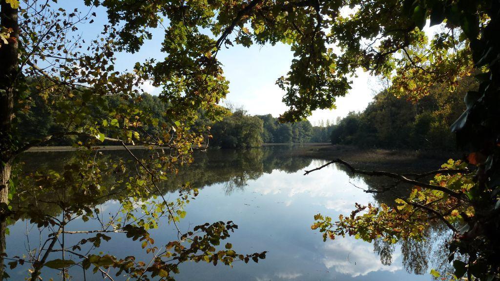 Spazier zum nahen Teich im Wald