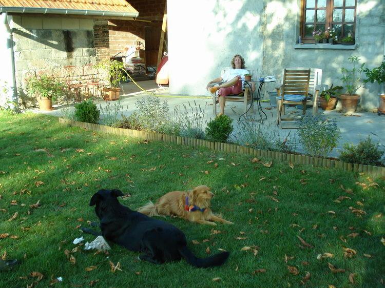 Henny geniesst den Schatten auf der Terrasse