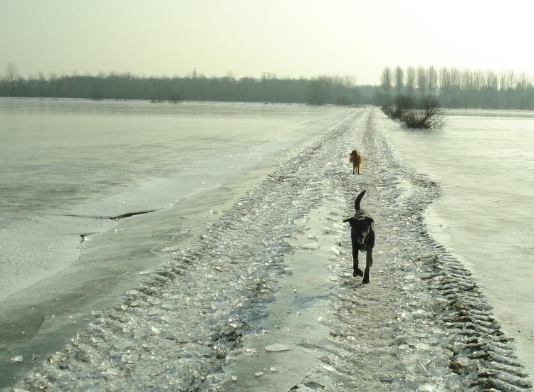 Spazier an der Seille - das Auenland war überflutet und ist dann zugefroren