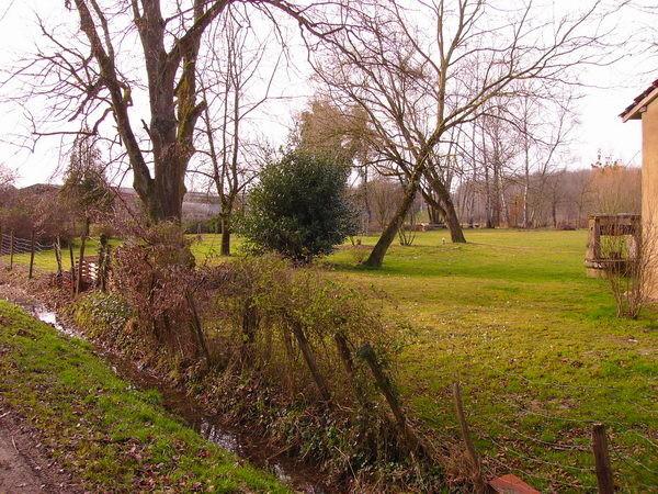 Ein paar Bäume stehen kreuz und quer - ob da eine Wasserader durchführt?