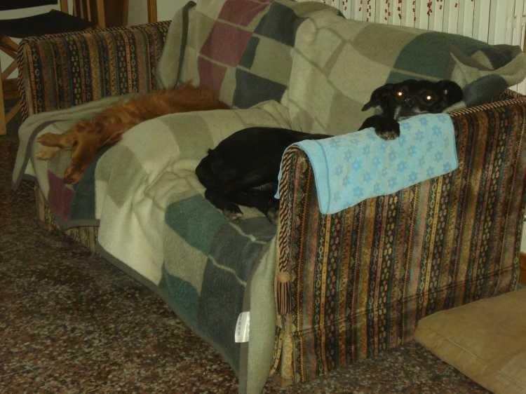 """Zorro und Luke schätzen das """"Hundesofa"""" sehr"""