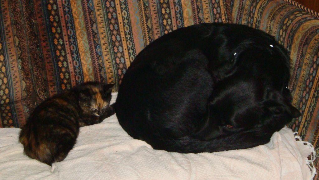 Luke scheint die Katzen langsam zu akzeptieren