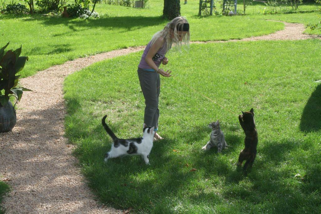 Zora spielt mit den Katzen