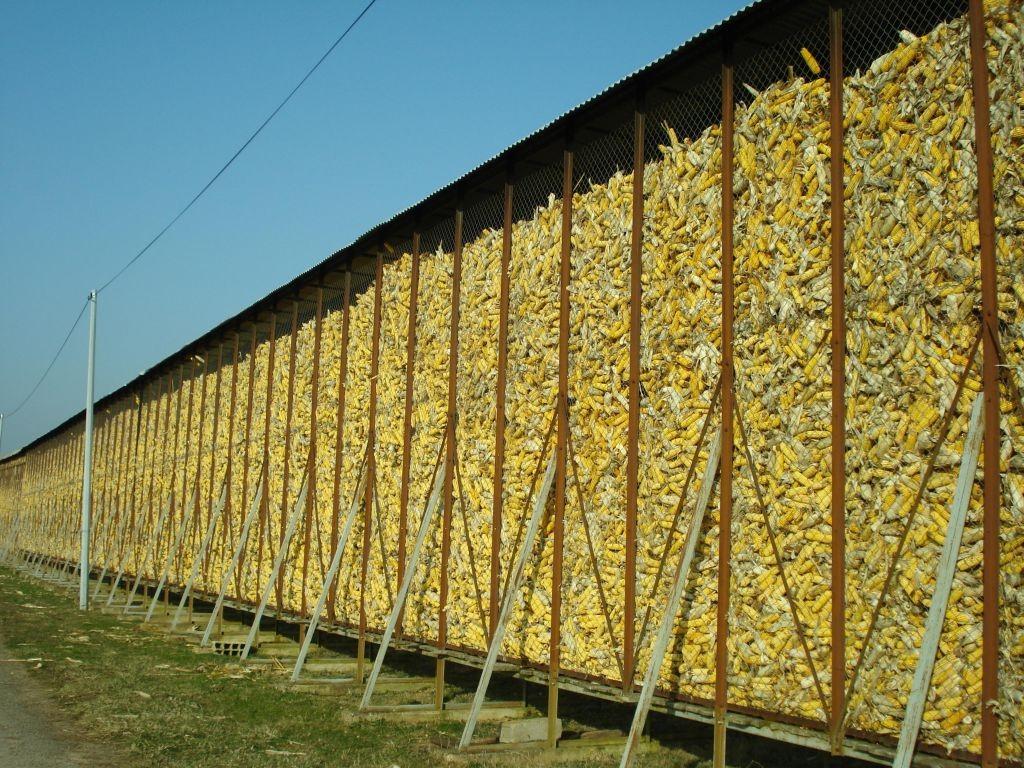 Typisches Maisreservoir
