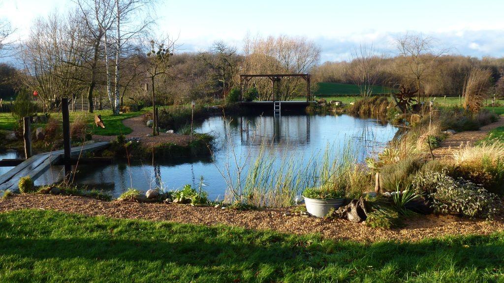 Der gerodete Teich