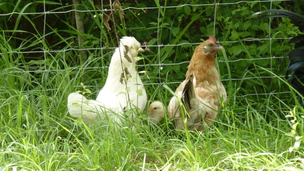 Judy und Sahara, unterwegs mit ihrem Kleinen