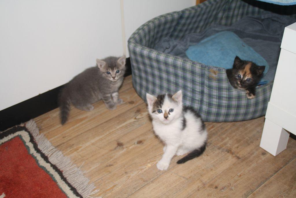 Mitte Mai bekomme ich Nachwuchs: drei Katzenbabys, ca. 6 Wochen alt