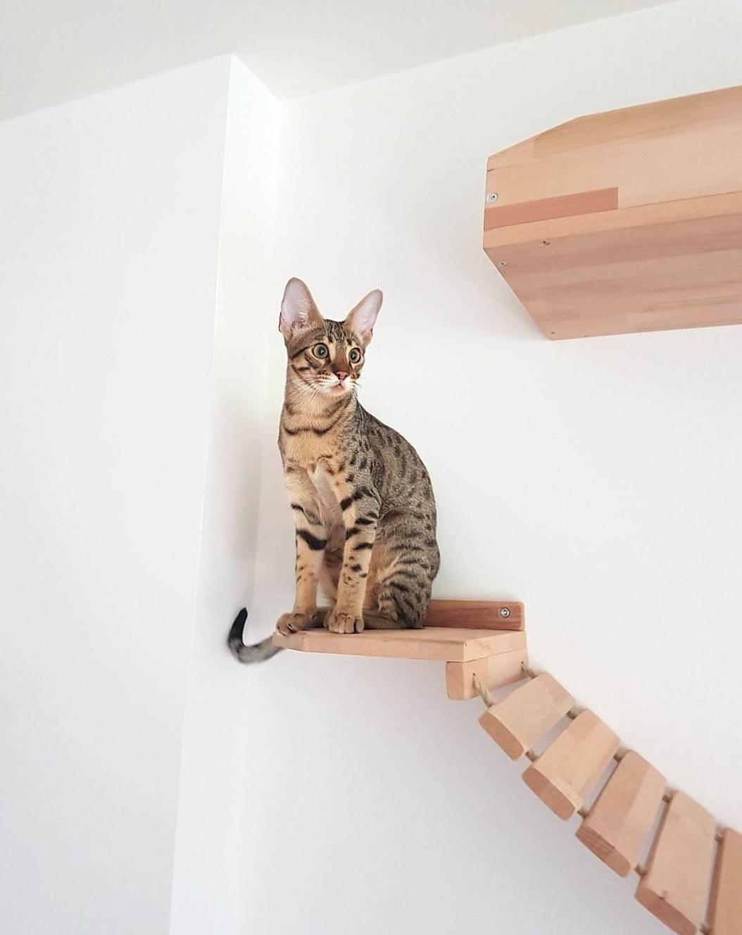 Blog tolle katzen kletterwand katzenkletterwand kletterwand katze - Kletterwand katze ...