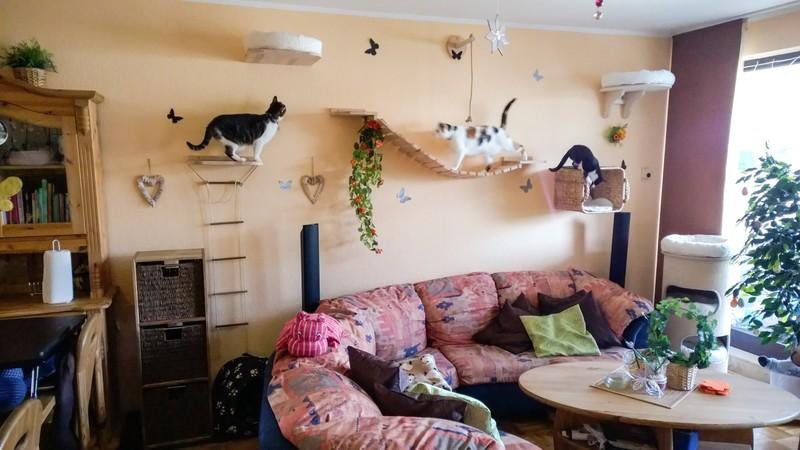 kundenbilder von unseren produkten f r eine neue raumgestaltung f r ihre katze tolle katzen. Black Bedroom Furniture Sets. Home Design Ideas