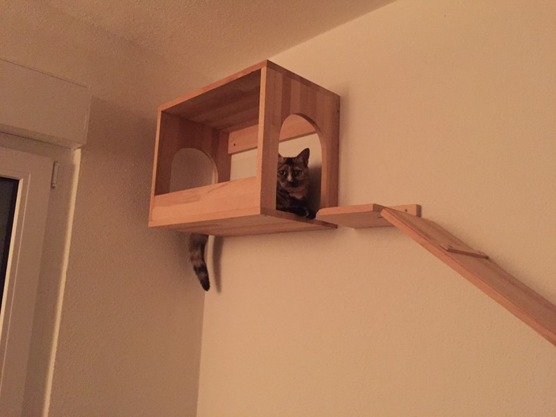 Katzenmöbel Wand