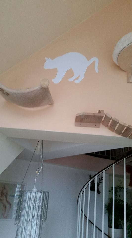 Katzenwandbretter