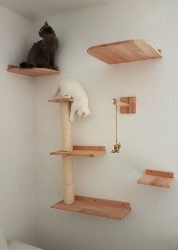Kratzbaum Fur Katzen An Der Wand Tolle Katzen Kletterwand