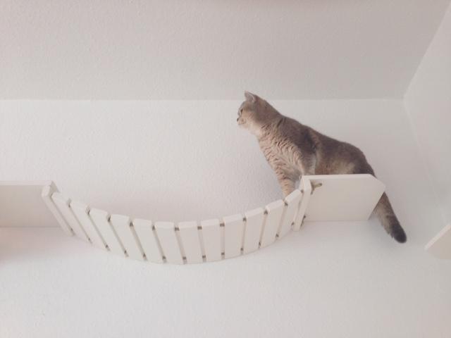 Wandbretter für Katzen