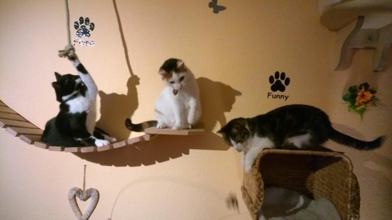 Hängeleiter Katzen