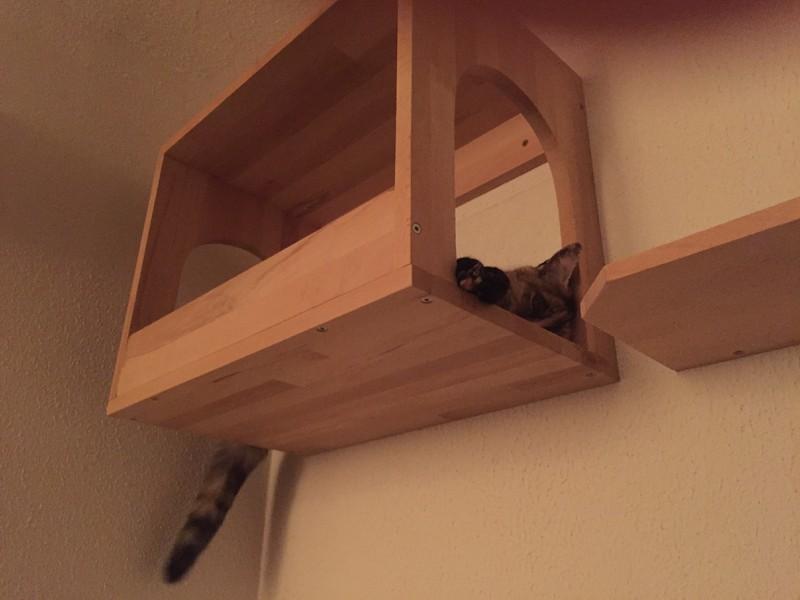Schlafkasten Katze