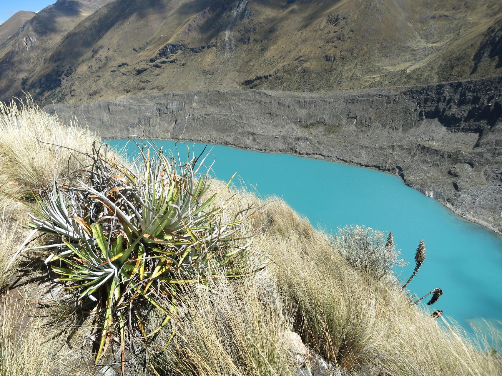 Kaktus, See und oben Gletscher...einmalig!