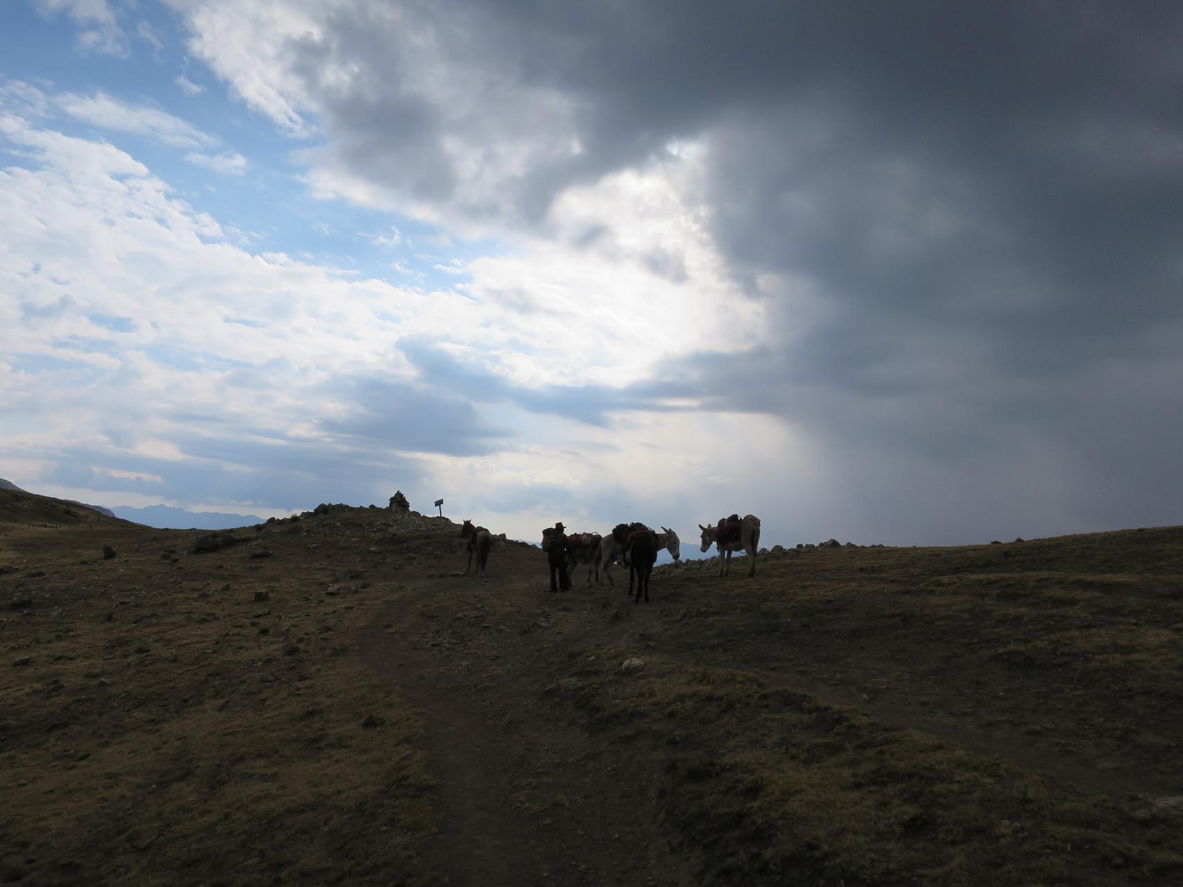Unsere Esel auf der Passhöhe
