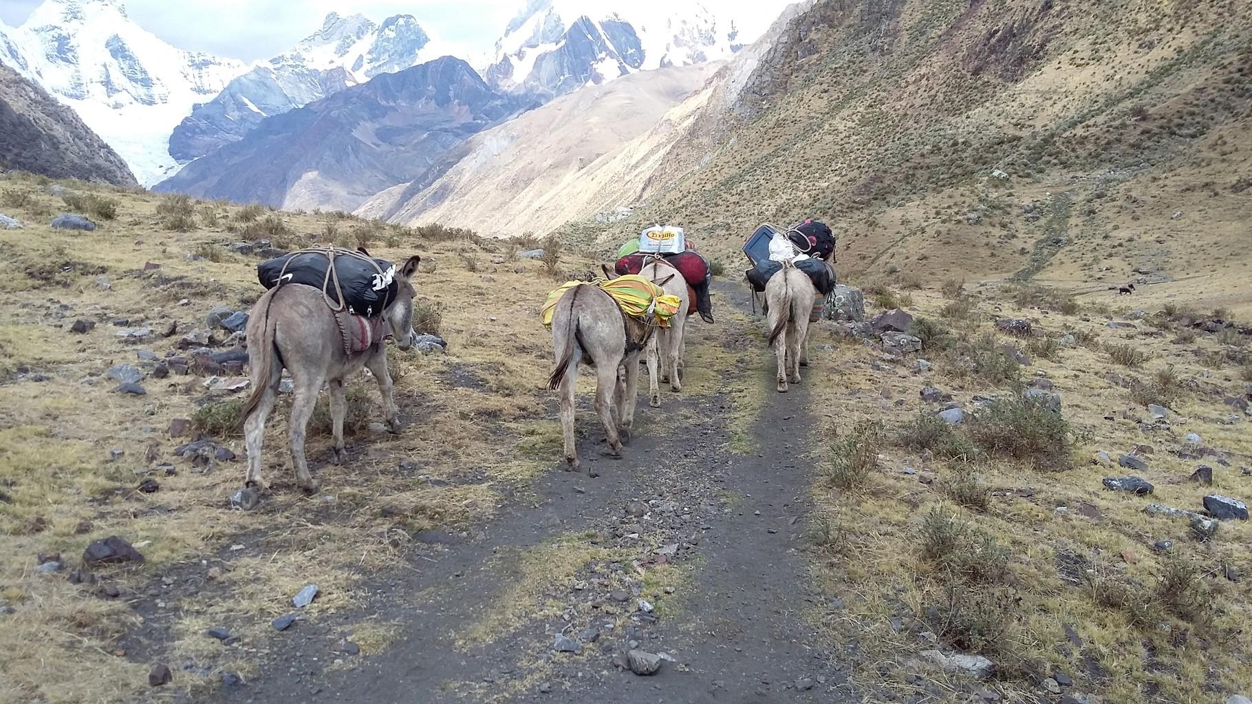 Die Esel wussten genau wo sie durch mussten, das war faszinierend