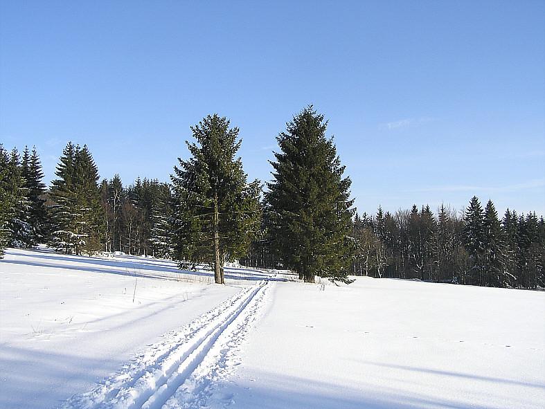 In der Loipe bei Steinberg