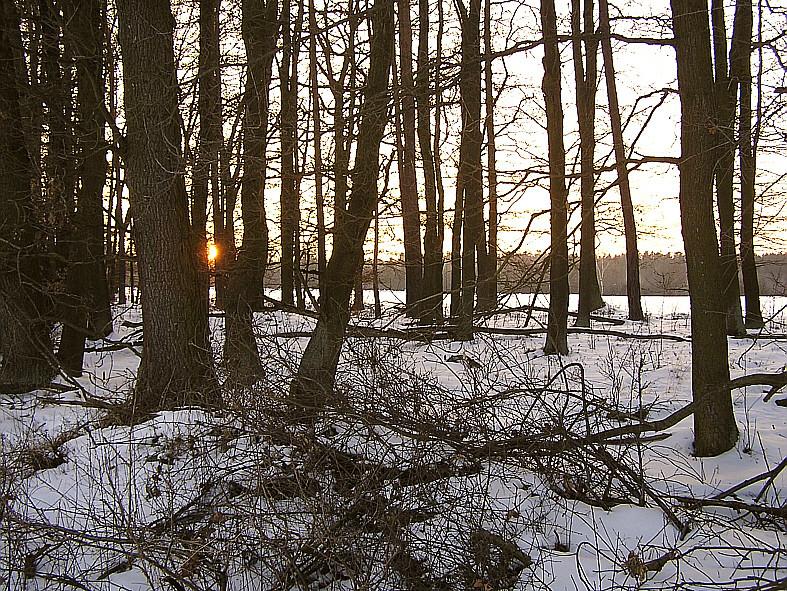 Spätnachmittagsstimmung am Rudolphshaner Wald