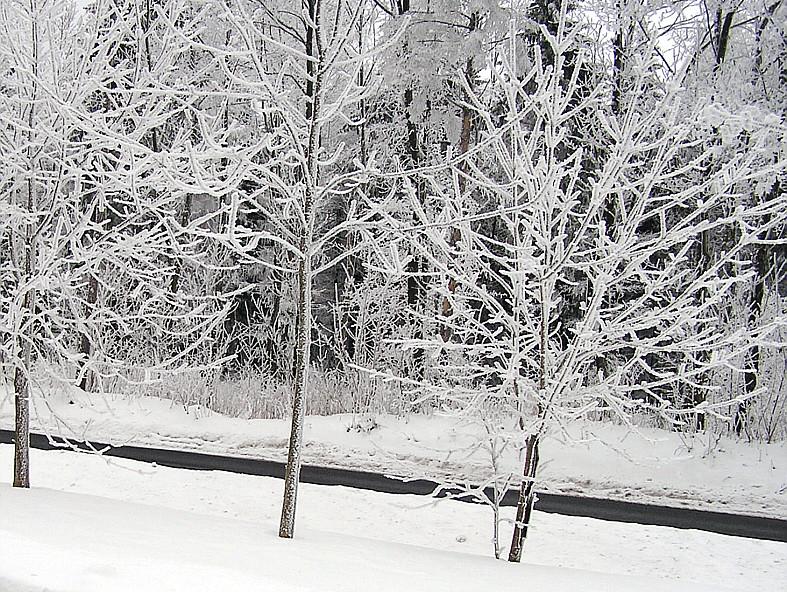 Wintermärchen im Rhönwald bei Hilders