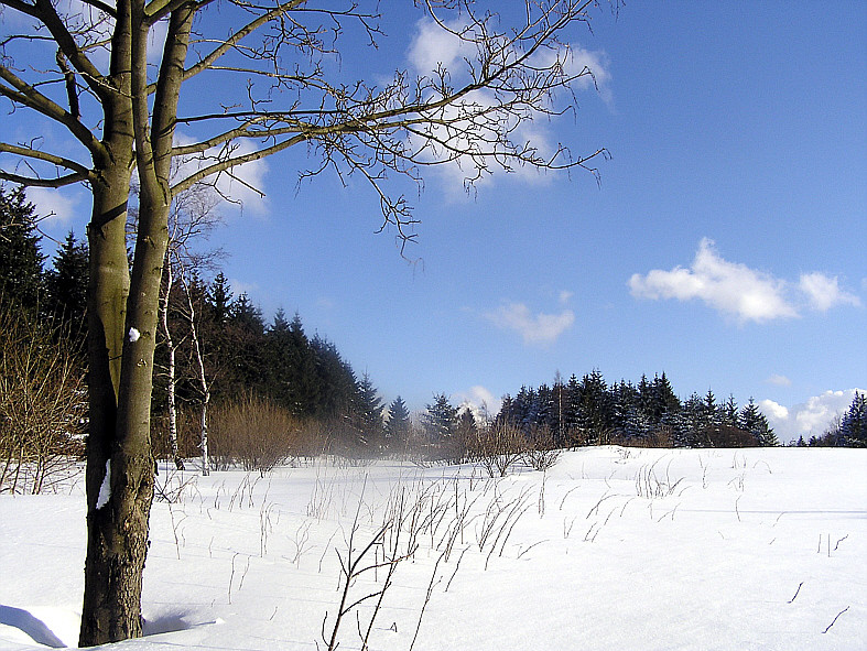 In der Rhönwaldloipe