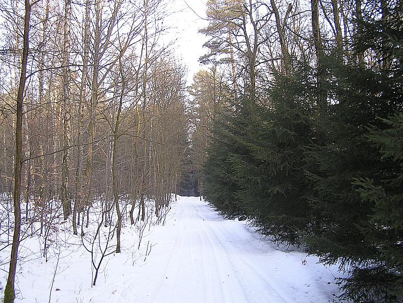 Im Rudolphshaner Wald
