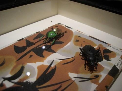 Objektrahmen für Insektensammlungen