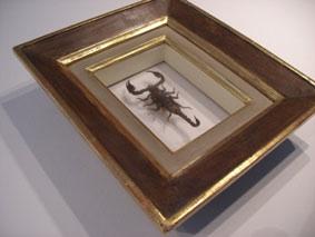 Schaukasten Objekt-Rahmen für Skorpion