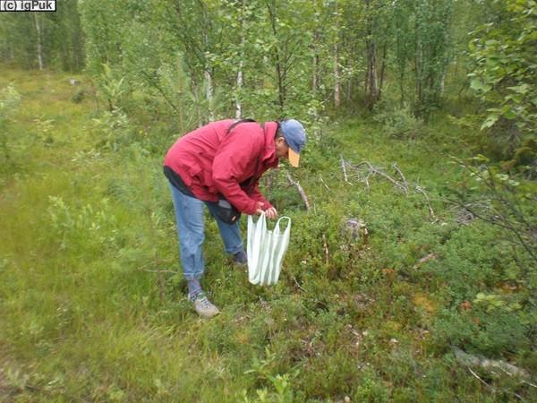 Naturreservat Jupukka bei Autio