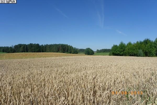 Getreidefeld am Radweg